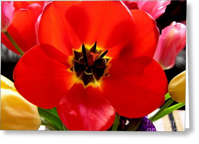 Flower Blossom Greeting Cards - Red Tulip Greeting Card by Vicki Buckler