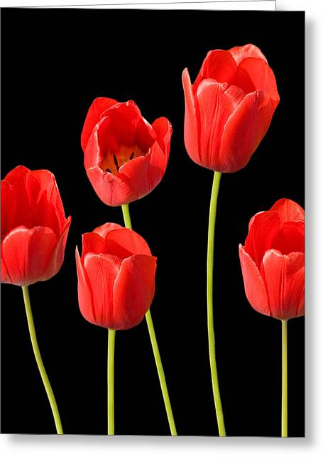 Natalie Kinnear Greeting Cards - Red Tulips Black Background Greeting Card by Natalie Kinnear