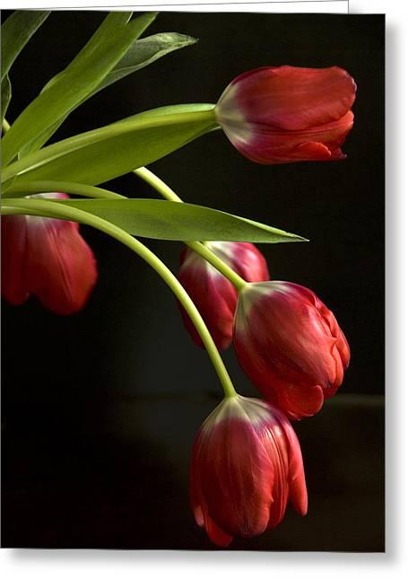 Cindy Rubin Greeting Cards - Red Tulips Greeting Card by Cindy Rubin
