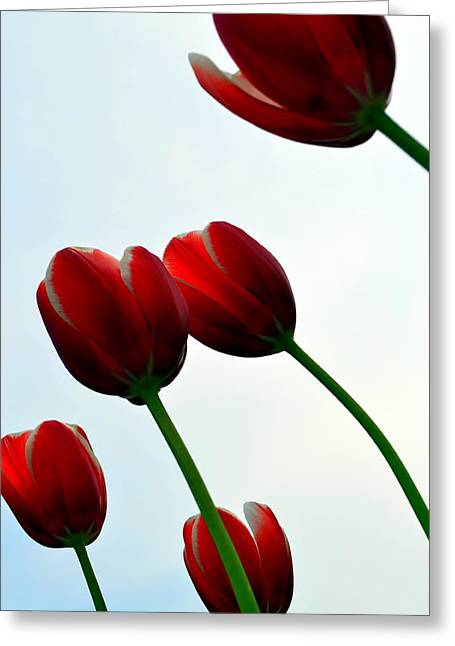 Photograph Greeting Card featuring the photograph Red Tulips From The Bottom Up Vii by Michelle Calkins