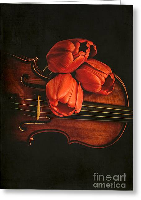 Red Tulips On A Violin Greeting Card by Edward Fielding