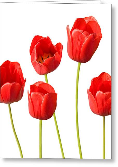 Red Tulips White Background Greeting Card by Natalie Kinnear