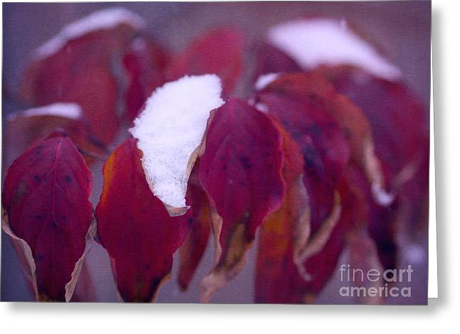 Red Leaves Greeting Cards - Red Velvet in Winter Greeting Card by Irina Wardas