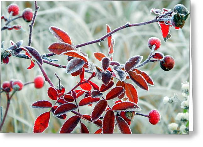 Annapolis Valley Greeting Cards - Red Velvet Greeting Card by Karen Cook