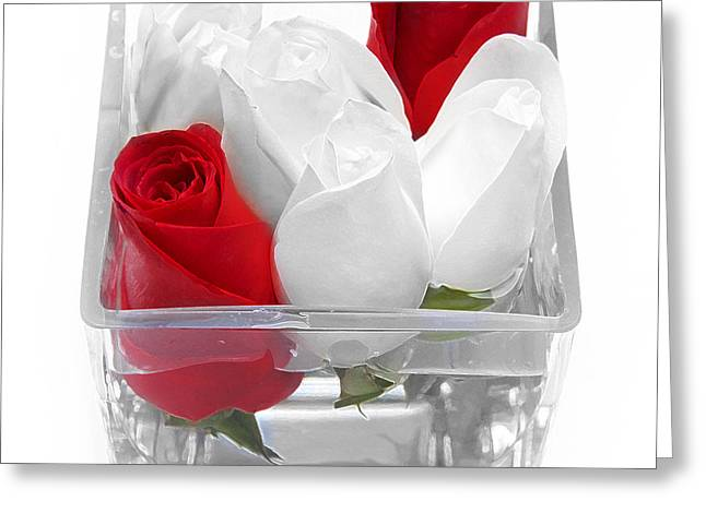 Red Versus White Roses Greeting Card by Andee Design