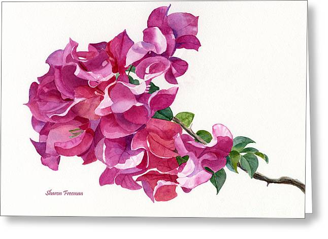 Pink Blossoms Greeting Cards - Red Violet and Pink Bougainvillea on a Branch Greeting Card by Sharon Freeman