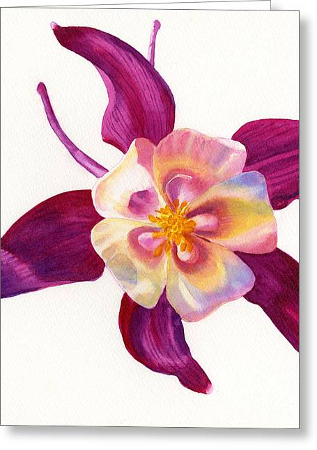 Violet Art Greeting Cards - Red Violet Columbine Square Design Greeting Card by Sharon Freeman