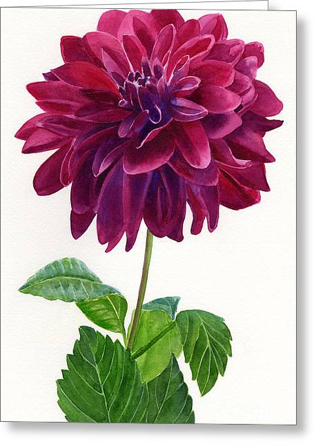 Isolated Paintings Greeting Cards - Red Violet Dahlia Blossom Greeting Card by Sharon Freeman