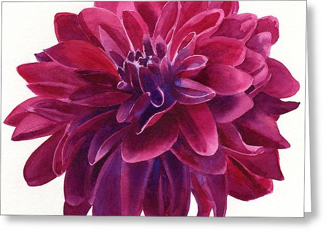 Dahlia Greeting Cards - Red Violet Dahlia Square Design Greeting Card by Sharon Freeman