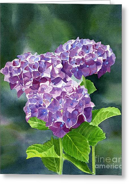Hydrangeas Greeting Cards - Red Violet Hydrangea with Blackground Greeting Card by Sharon Freeman
