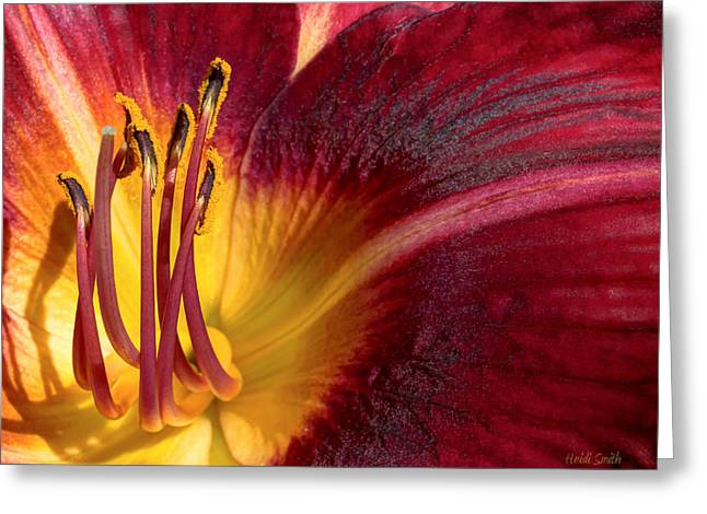 Day Lilly Greeting Cards - Red Volunteer Greeting Card by Heidi Smith