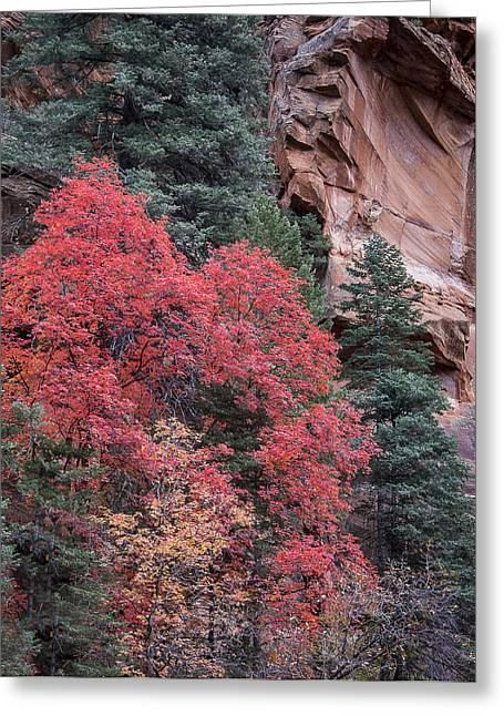 West Fork Greeting Cards - Red-Walled Canyon Greeting Card by Focus On Nature Photography