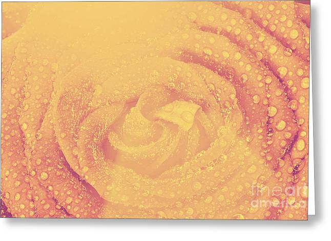 Wet Rose Greeting Cards - Red wet rose flower close-up in vintage style Greeting Card by Michal Bednarek