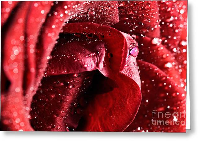 Wet Rose Greeting Cards - Red wet rose flower close-up Greeting Card by Michal Bednarek