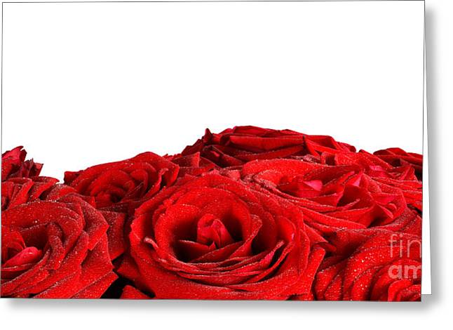 Wet Rose Greeting Cards - Red wet roses flowers isolated on white background Greeting Card by Michal Bednarek