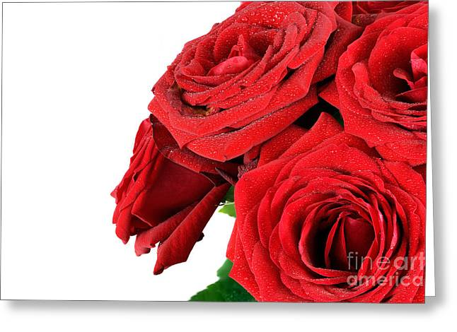Bouquet Of Roses Greeting Cards - Red wet roses flowers isolated on white Greeting Card by Michal Bednarek