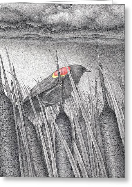 Fall Grass Drawings Greeting Cards - Red-winged Blackbird Greeting Card by Wayne Hardee
