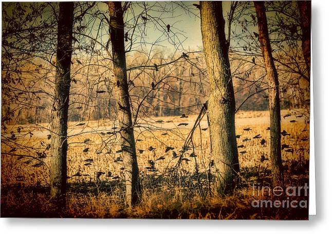 South For The Winter Greeting Cards - Red-winged Blackbirds Greeting Card by Elizabeth Winter
