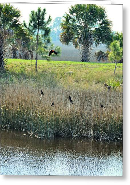Wildlife Refuge. Greeting Cards - Red Winged Blackbirds Greeting Card by Jan Amiss Photography