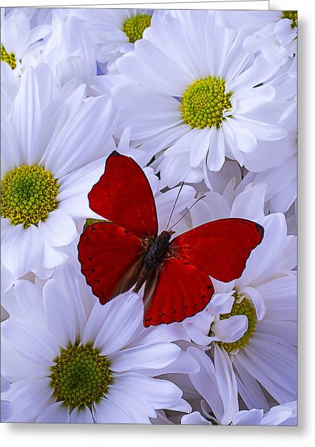 Seasonal Bloom Greeting Cards - Red Wings On White Daises Greeting Card by Garry Gay