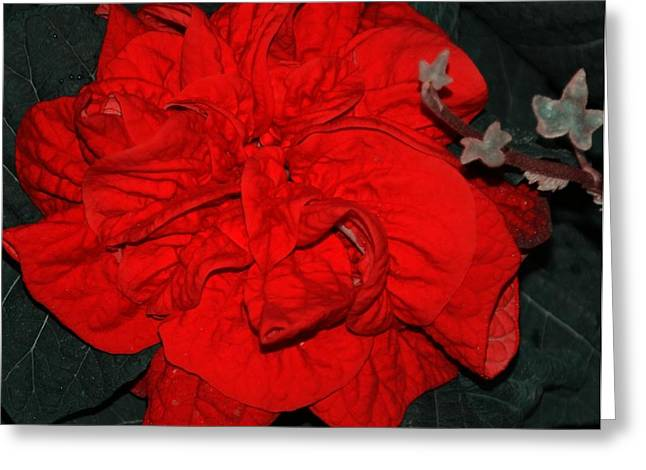 Red Winter Rose Greeting Card by Kathleen Struckle