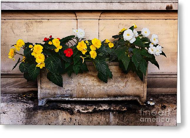 Stone Flower Planter Greeting Cards - Red yellow and white begonias Greeting Card by Louise Heusinkveld