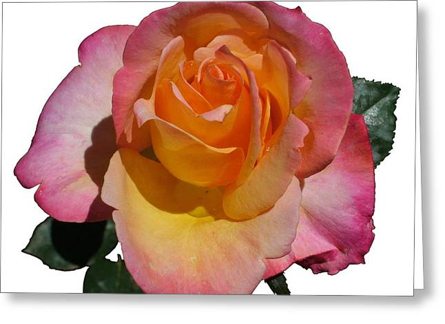 Red Yellow Rose Greeting Card by Geoffrey McLean