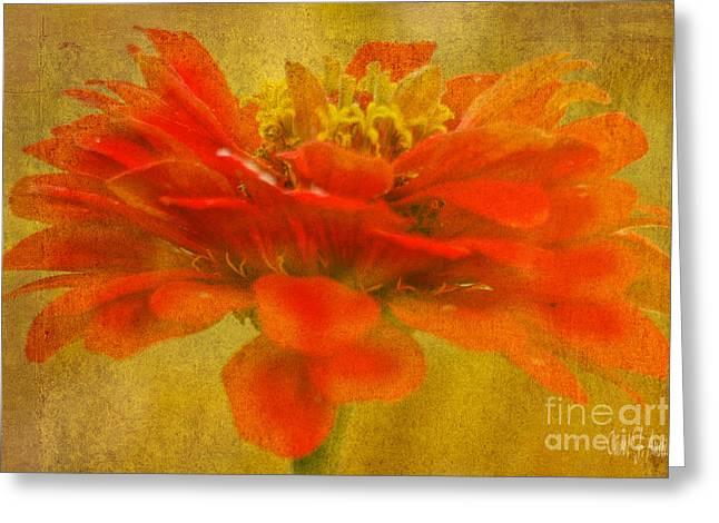 Red Zinnia Essence Greeting Card by Carol F Austin