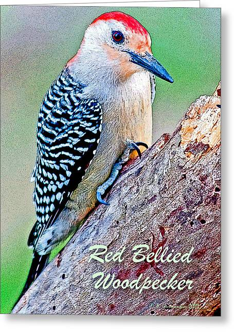 Greeting Card featuring the photograph Redbellied Woodpecker Poster Image by A Gurmankin