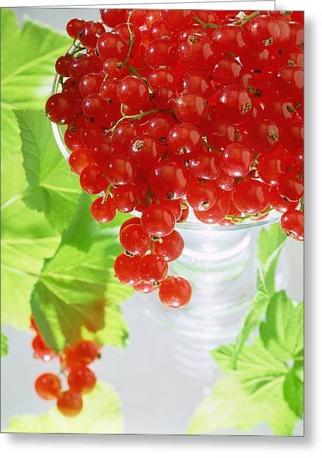 Bowl Of Food Greeting Cards - Redcurrants and leaves Greeting Card by Norman Hollands