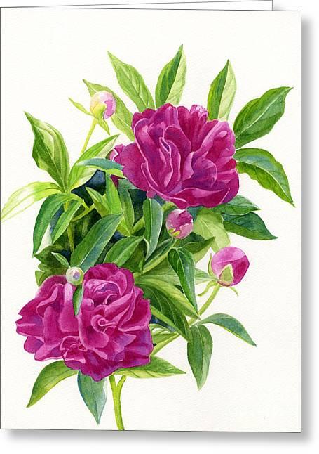 Violet Art Greeting Cards - Reddish Pink Peonies 2 Greeting Card by Sharon Freeman
