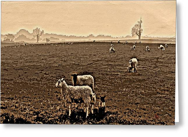 Sheep Digital Art Greeting Cards - Redeemed by the Lamb Greeting Card by Mindy Newman