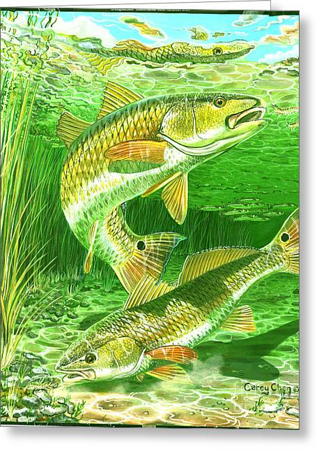 Mullet Greeting Cards - Redfish Haven In0018 Greeting Card by Carey Chen
