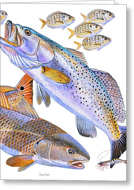 Bonefish Greeting Cards - Redfish Trout Greeting Card by Carey Chen