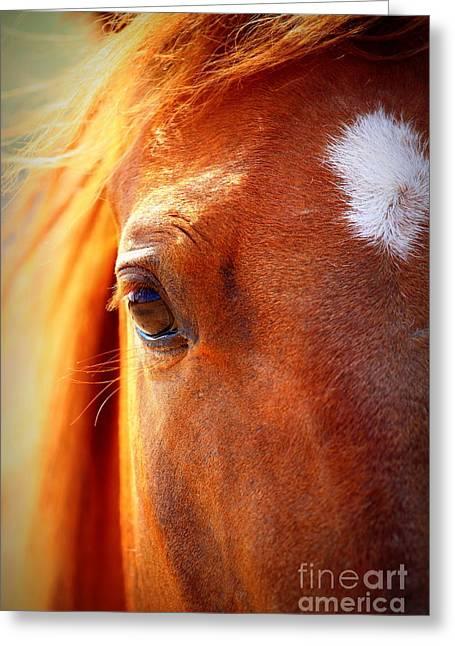Arie Arik Chen Greeting Cards - Redhead Horse Greeting Card by Arie Arik Chen