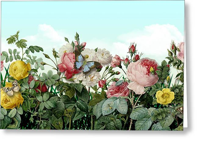 Antique Digital Greeting Cards - Redoute Roses Greeting Card by Gary Grayson