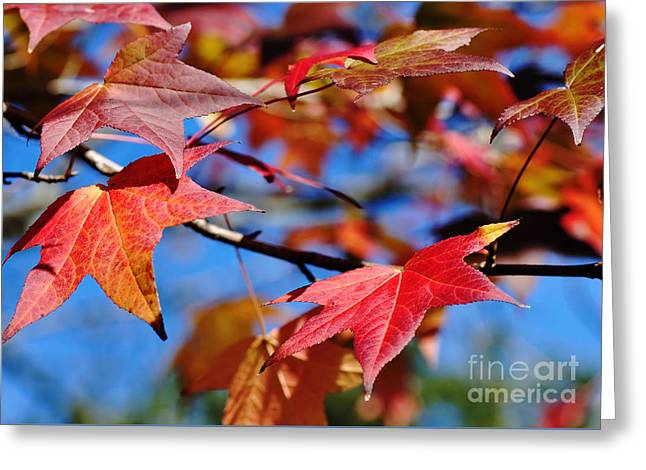 Shades Of Red Greeting Cards - Reds of Autumn Greeting Card by Kaye Menner