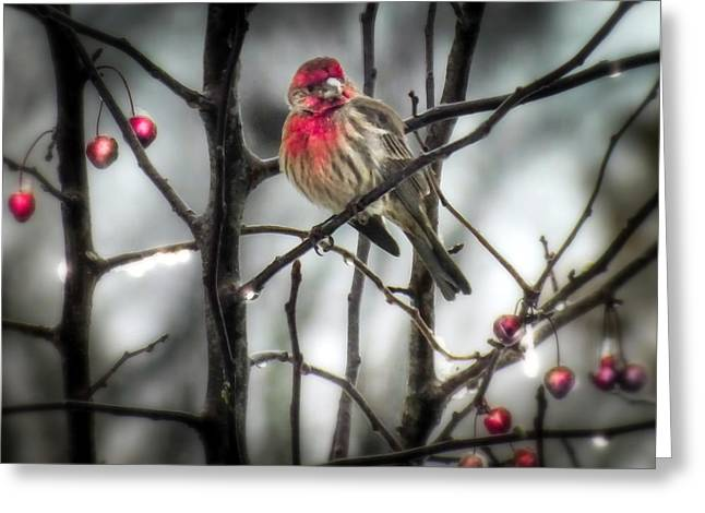 Small Birds Greeting Cards - REDS of WINTER Greeting Card by Karen Wiles