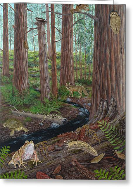 Redwood Forest Greeting Card by Carlyn Iverson