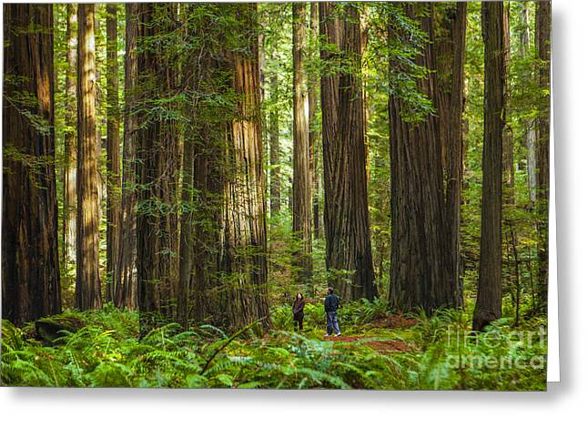 Redwood Forest Greeting Card by Diane Diederich