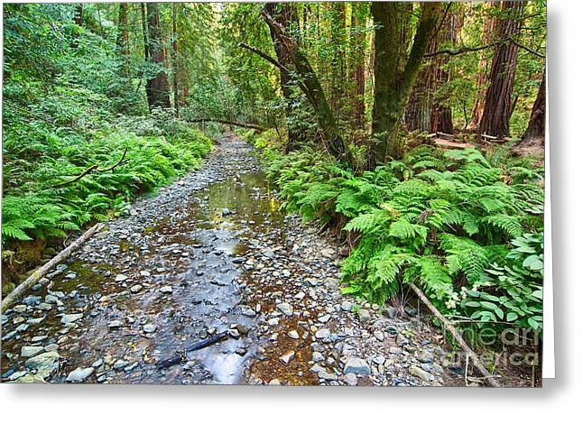 Redwood Forest Of Muir Woods National Monument. Greeting Card by Jamie Pham