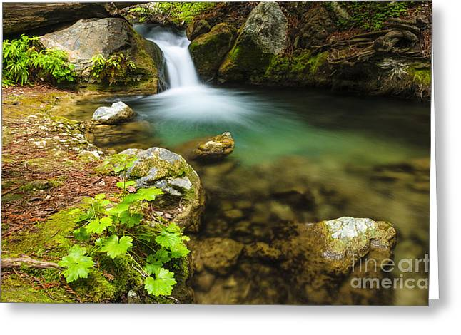 Big Sur California Greeting Cards - Redwood Grotto Greeting Card by Russ Bishop