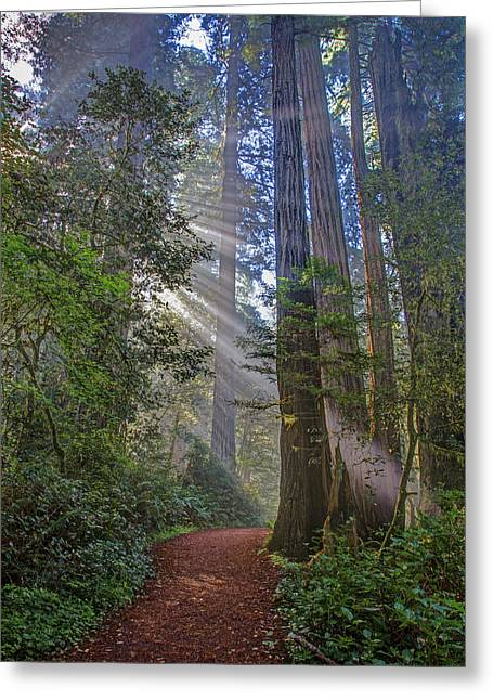 Damnation Greeting Cards - Redwood Grove Trail 2013 Greeting Card by Ralph Nordstrom