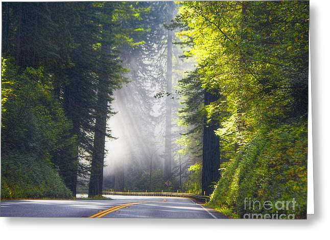 Tn Greeting Cards - Redwood Highway 101 California Greeting Card by TN Fairey