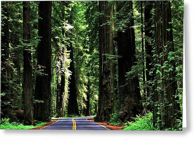 Scenic Drive Greeting Cards - Redwood Highway Greeting Card by Benjamin Yeager