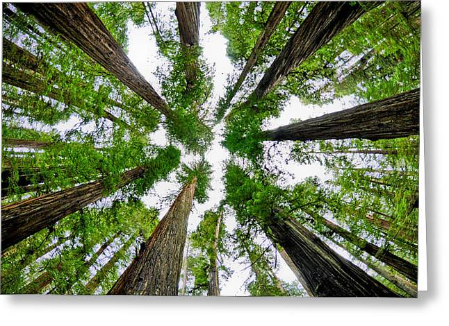 Crescent City Greeting Cards - Redwood Skies Greeting Card by Kevin Munro