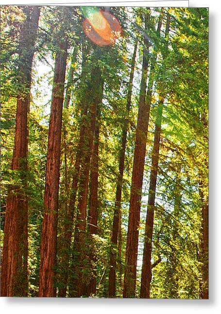 Redwood Wall Mural Panel 1 Greeting Card by Artist and Photographer Laura Wrede