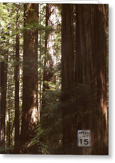 Redwood Tree Greeting Cards - Redwoods 2 Greeting Card by Mike McGlothlen