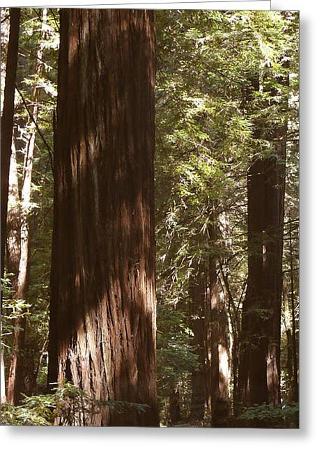 Redwood Tree Greeting Cards - Redwoods Greeting Card by Mike McGlothlen