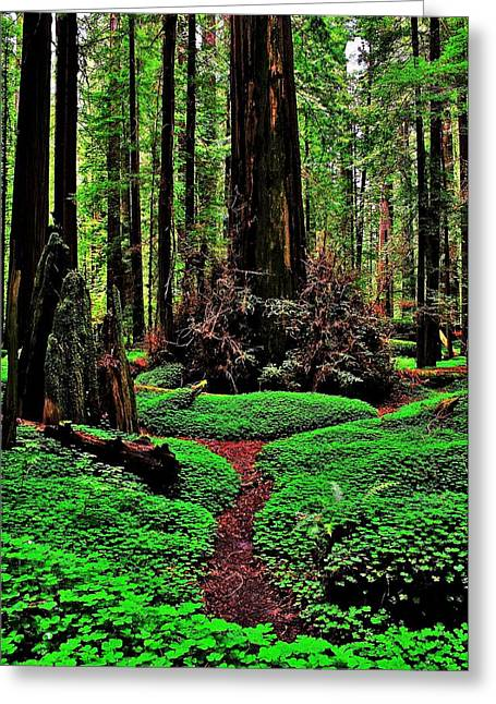 Redwoods Wonderland Greeting Card by Benjamin Yeager